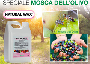 mosca d'olivo